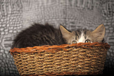 kitten hiding in a basket photo