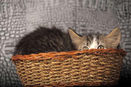kitten hiding in a basket photo