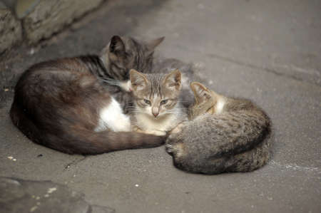 relict: homeless cats