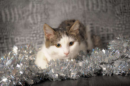 Lying christmas kitten  photo