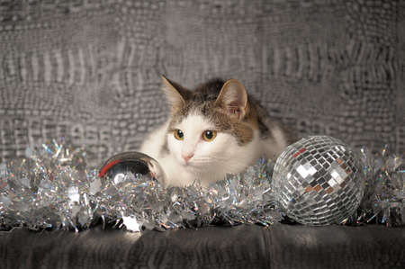 Lying christmas kitten  photo
