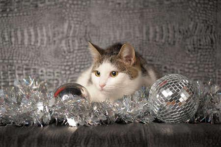 Lying christmas kitten Stock Photo - 11423093