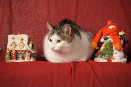 Cat and Christmas photo