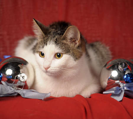 cat and Christmas balls photo