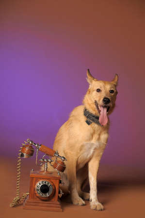 red mongrel half-breed dog and antique wooden telephone Stock Photo - 11570380