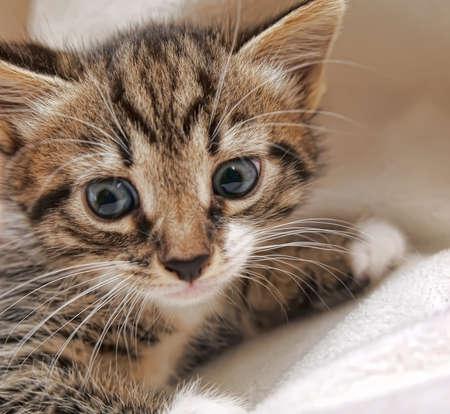 Little kitten Stock Photo - 13292611
