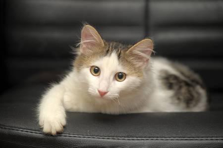 white and gray cat  photo