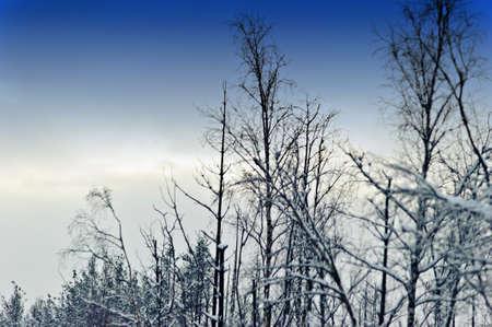 clinging: Wonderland quiet winter frozen forest