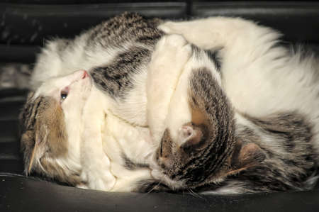 two kittens playing fighting photo