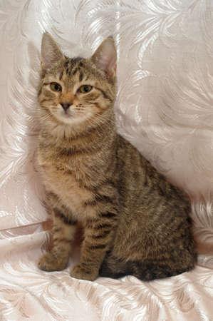 gray-brown tabby kitten 4 months photo