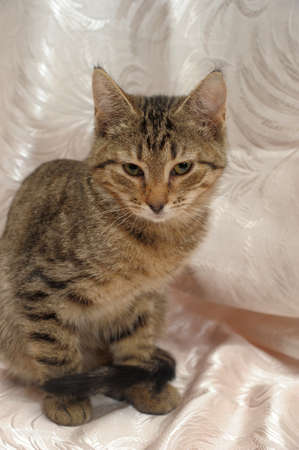 gray brown tabby kitten 4 months stock photo picture and royalty