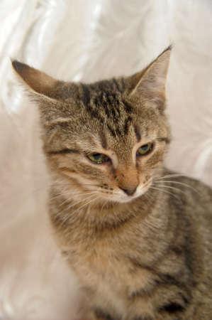 striped kitten 4 months photo