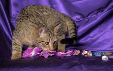 Tabby Cat Stock Photo - 13506175
