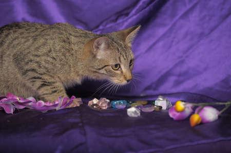Tabby Cat Stock Photo - 13506184