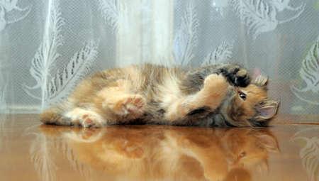 The small amusing fluffy kitten plays Stock Photo - 12676046