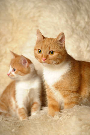 Red cat with a kitten Stock Photo - 13755500