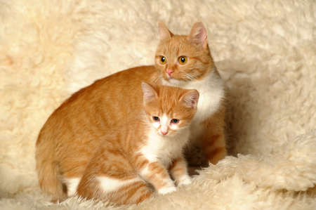 Red cat with a kitten Stock Photo - 18038997