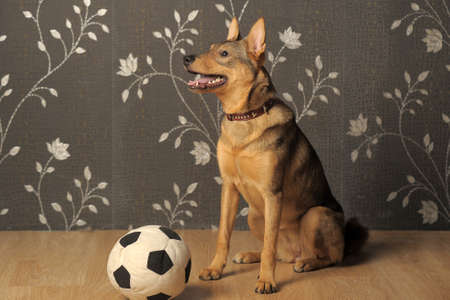 hoodlum: Dog with a ball