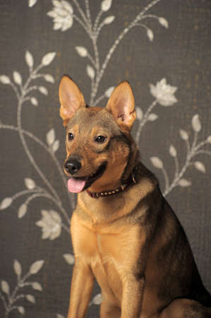 Brown young affable dog Stock Photo - 11996103