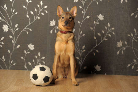 Dog with a ball photo