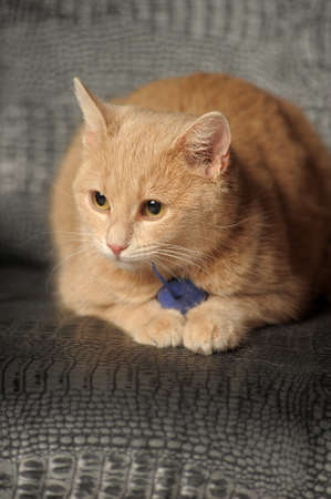 Cat with a toy mouse in paws photo