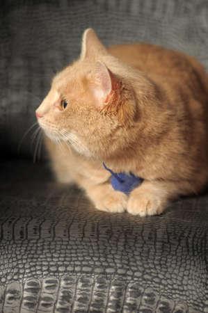 足でグッズ マウスを持つ猫