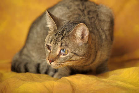 Cat with sick eyes Stock Photo - 11994225