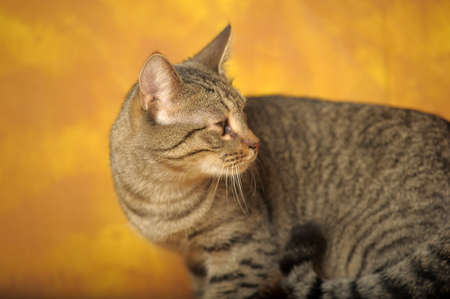 Cat with sick eyes Stock Photo - 11994223