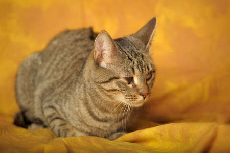 Cat with sick eyes Stock Photo - 11994227