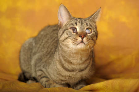 Cat with sick eyes Stock Photo - 11994221