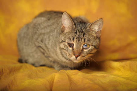 Cat with sick eyes Stock Photo - 11994229