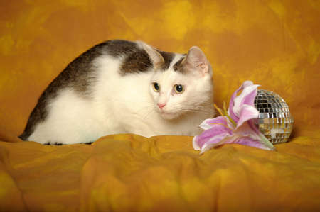White cat with gray stains with Lilac lily photo