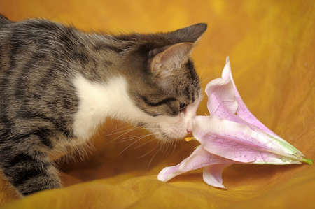 smells: The cat smells a flower Stock Photo
