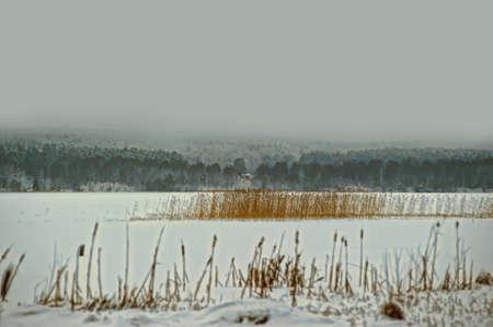 Under snow  photo