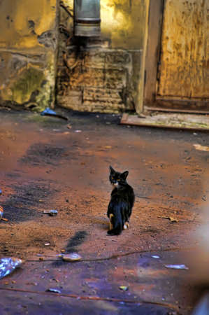 dismal: cat on the street Stock Photo