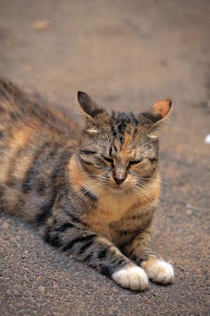 plainness: cat on the street Stock Photo