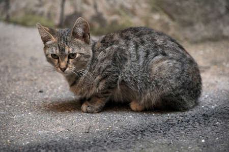 piteous: cat on the street Stock Photo