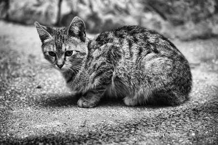 piteous: cat on the street Stock Photo