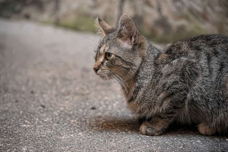 rueful: cat on the street Stock Photo