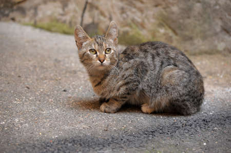 distressful: cat on the street Stock Photo