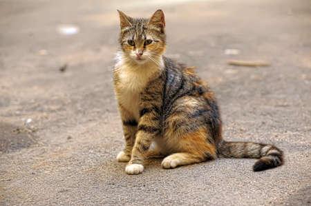 cat on the street Stock Photo - 11957087