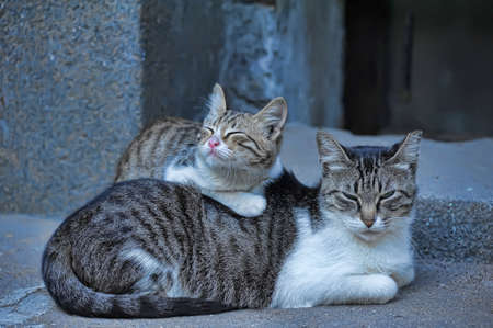 Homeless cats sleep in the street Stock Photo - 11978114