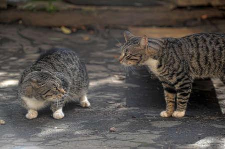 evita: cats are arguing Stock Photo