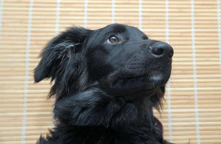 Black Dog Stock Photo - 12053411