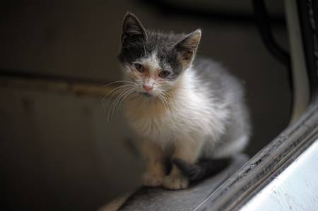 lugubrious: homeless cat