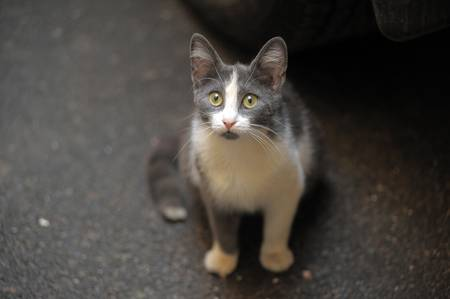 homeless cat Stock Photo - 14215210