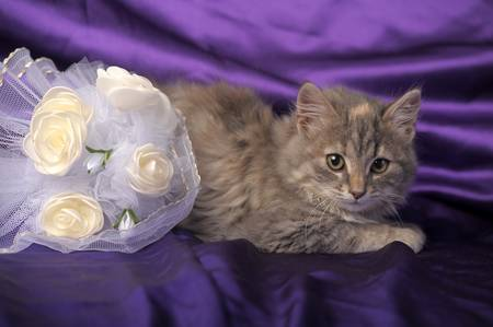 Wedding Bouquet and a cute cat. Stock Photo - 12052948