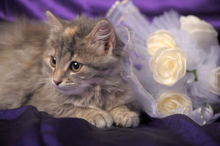 Wedding Bouquet and a cute cat. Stock Photo - 12052944