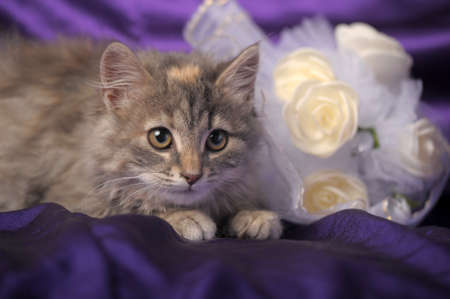 Wedding Bouquet and a cute cat. Stock Photo - 12052940