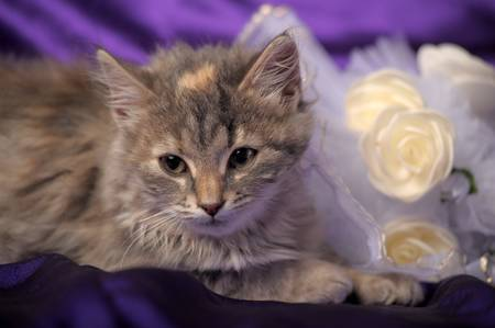 Wedding Bouquet and a cute cat. Stock Photo - 12046216